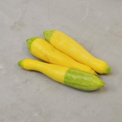 Courgettes zéphyr plein champ