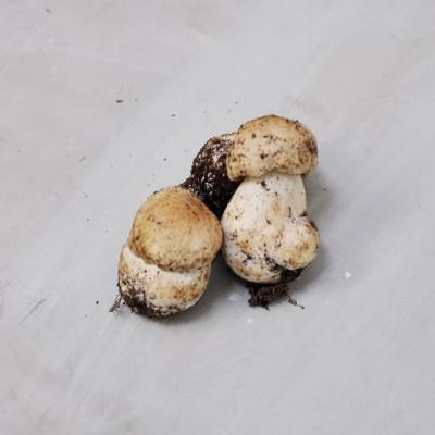 Cèpes bouchon origine France