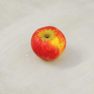 Pomme Reine des Reinettes...