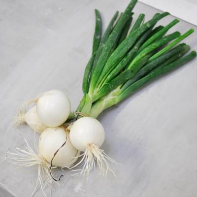 Oignons blanc en botte
