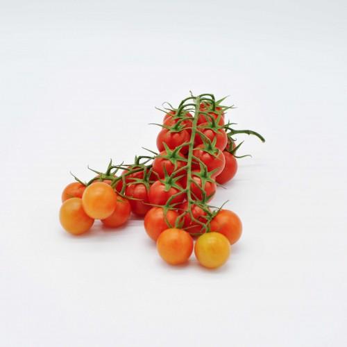 Tomates cerises grappe France