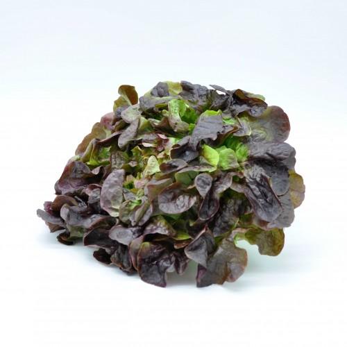 Salade feuille de chêne...