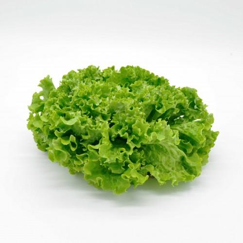 Salade Batavia origine France